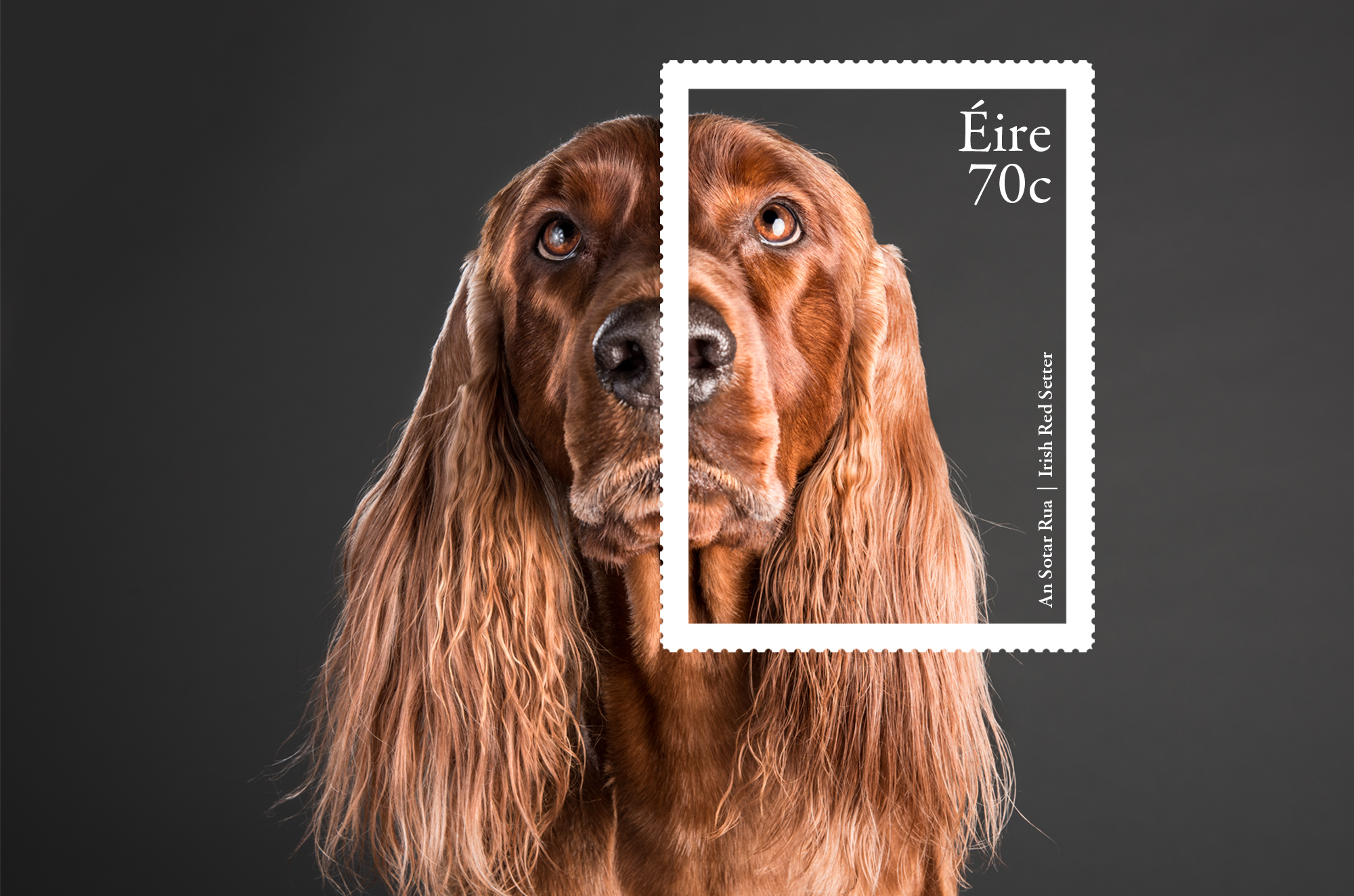 Cover image: Irish Dog Breeds Stamps