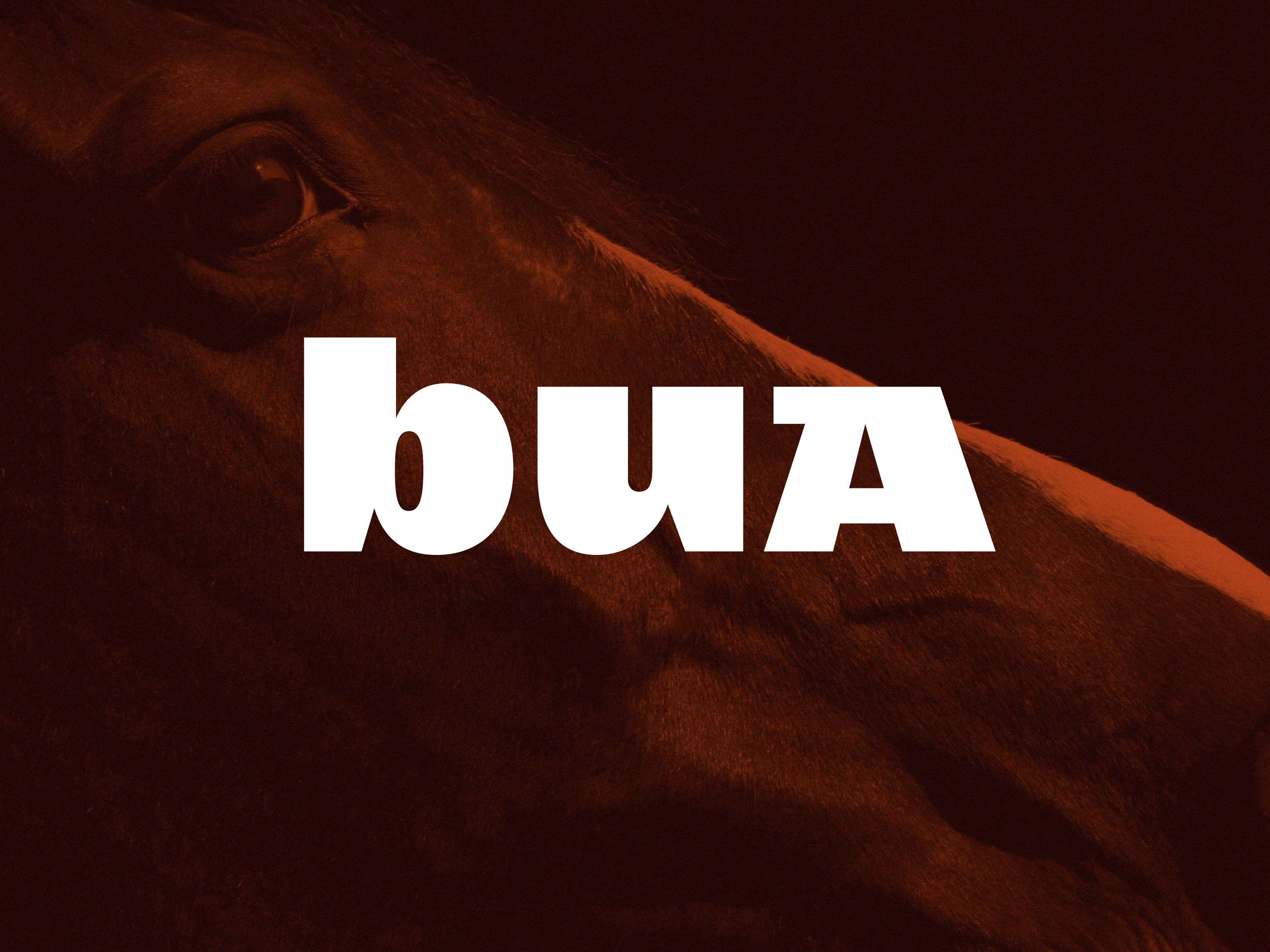 Cover image: Bua Saddles – Identity